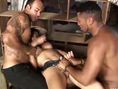 Guestimated Sex Tranny Banged
